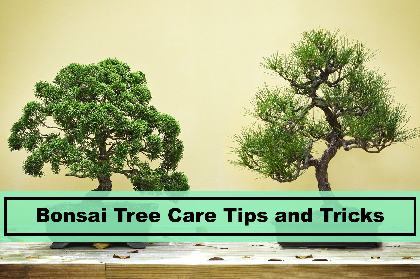 Bonsai Tree Care Tips And Things You Should Know Plants Spark Joy