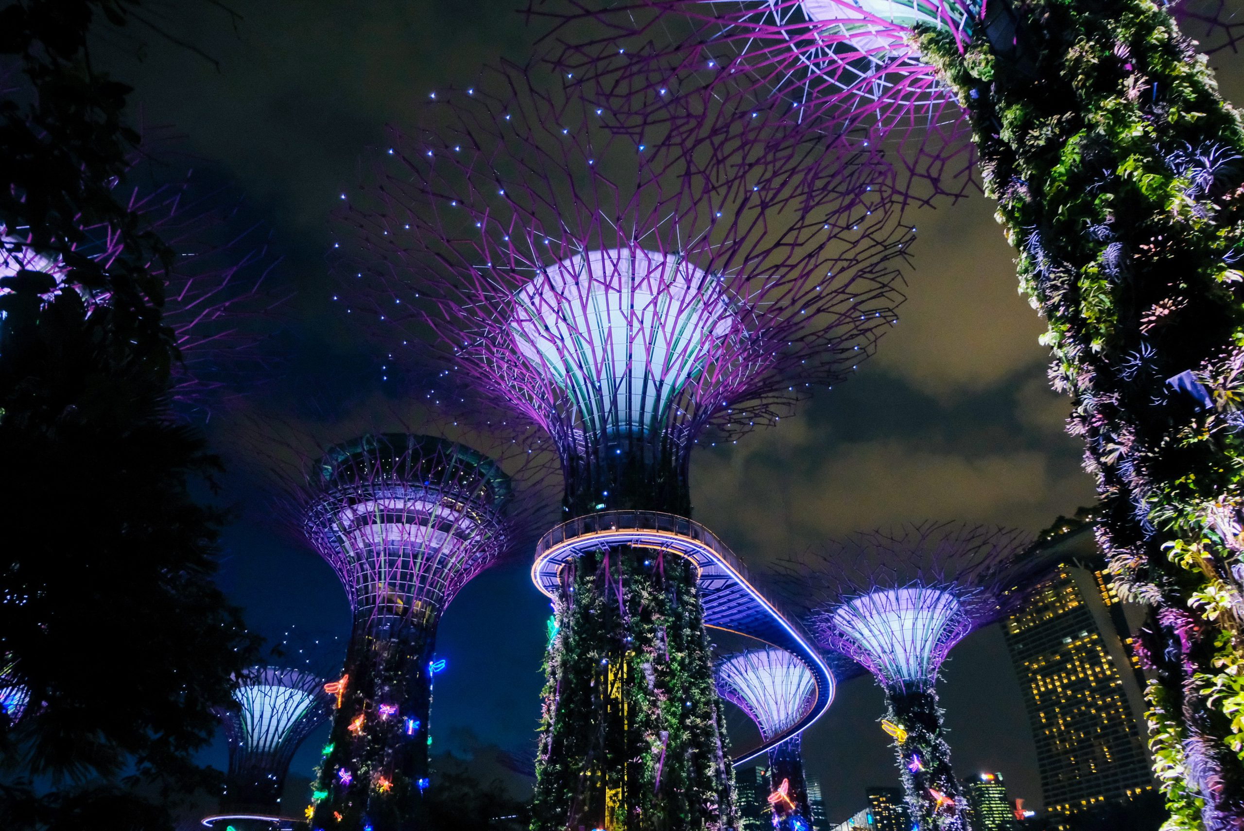 photo of Gardens by the Bay in Singapore, looking up at night with lights