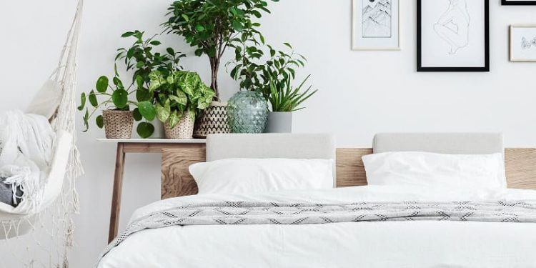 chic bedroom with plants