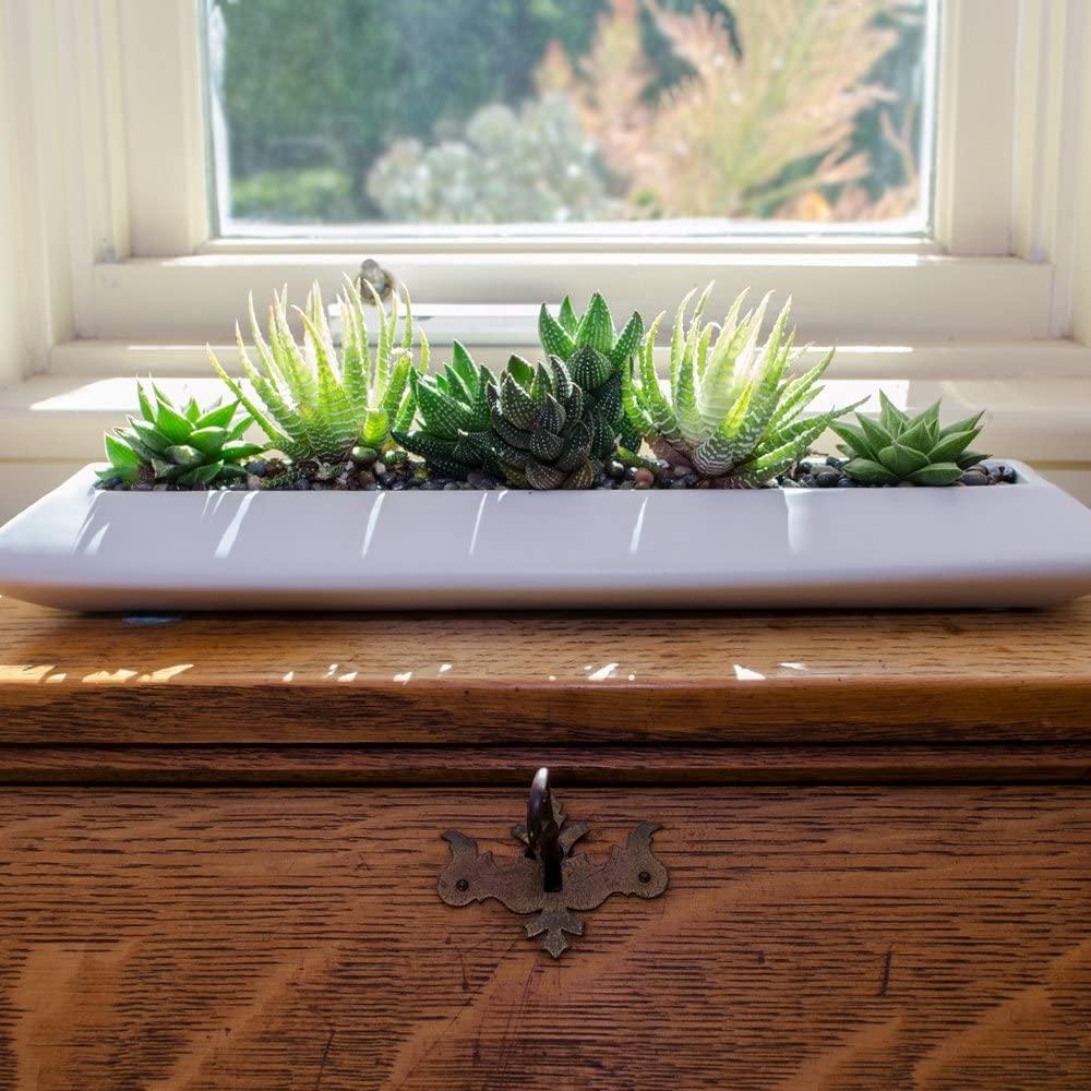 live succulent and cactus windowsill kit on desk