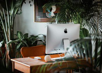 best desk plants