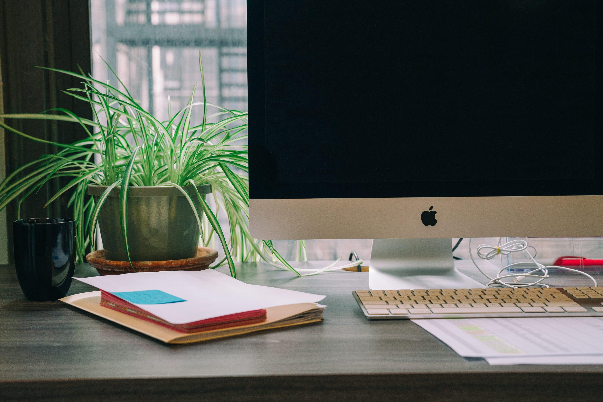 spider plant on desk decoration