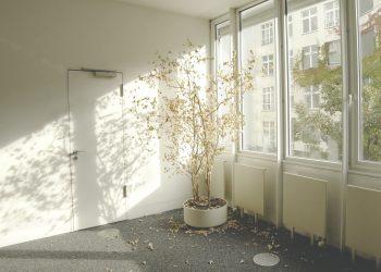 indoor tree plant
