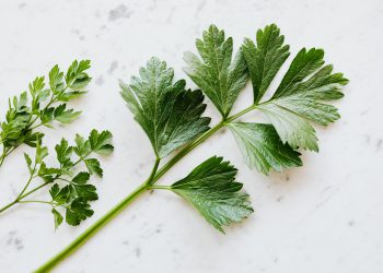 recipes with parsley