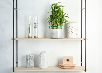 lucky-bamboo-decorated-in-small-planter-on-shelf