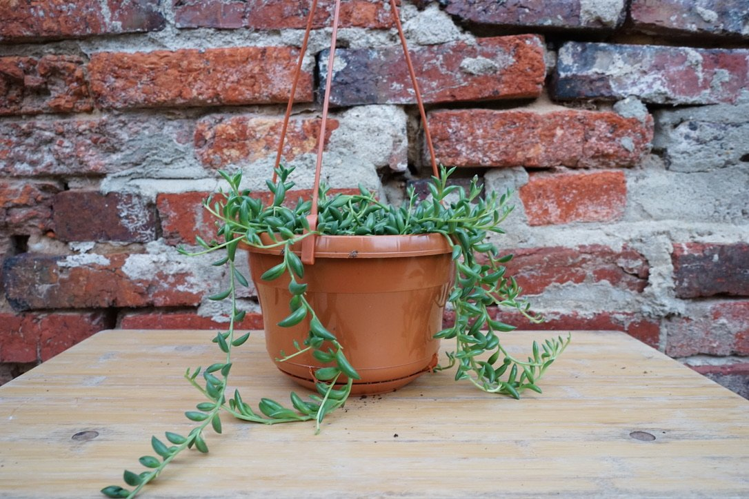 string of bananas on table with red brick in the background