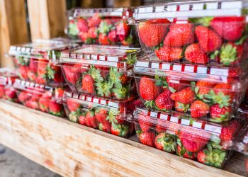 cartons full of strawberries to store