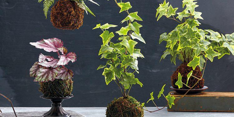 different kokedama houseplants