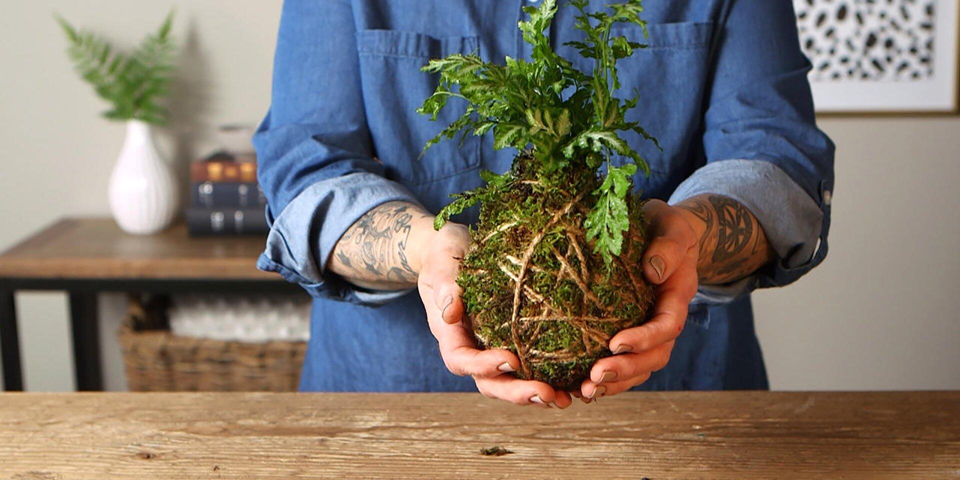 person holding kokedama moss ball houseplant
