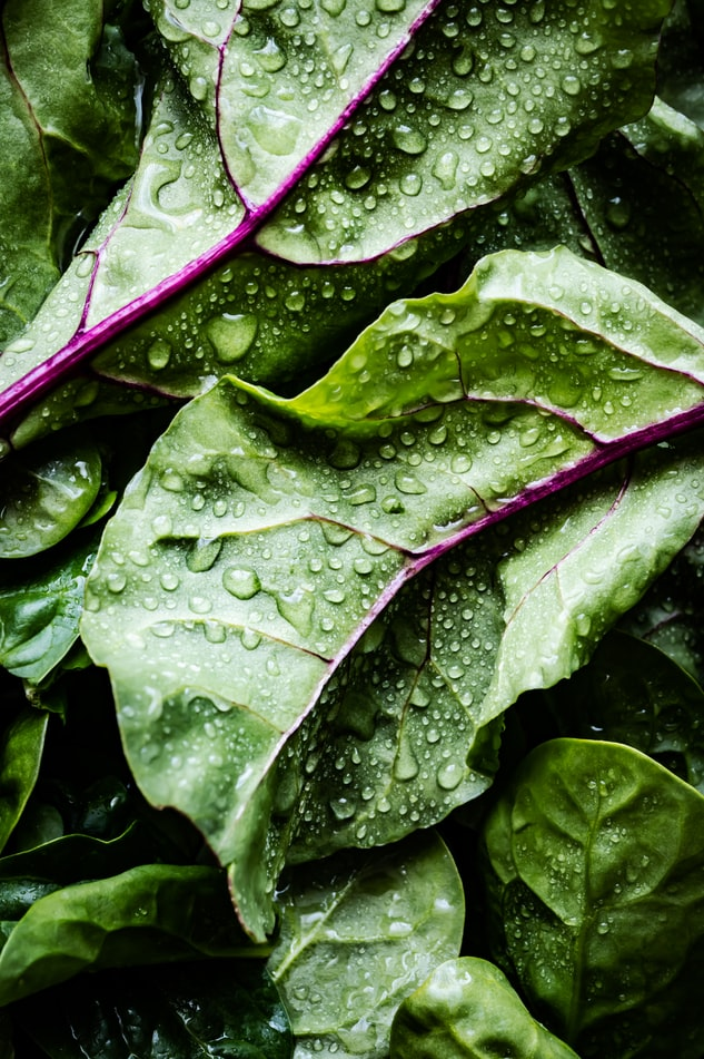 different variety of spinach
