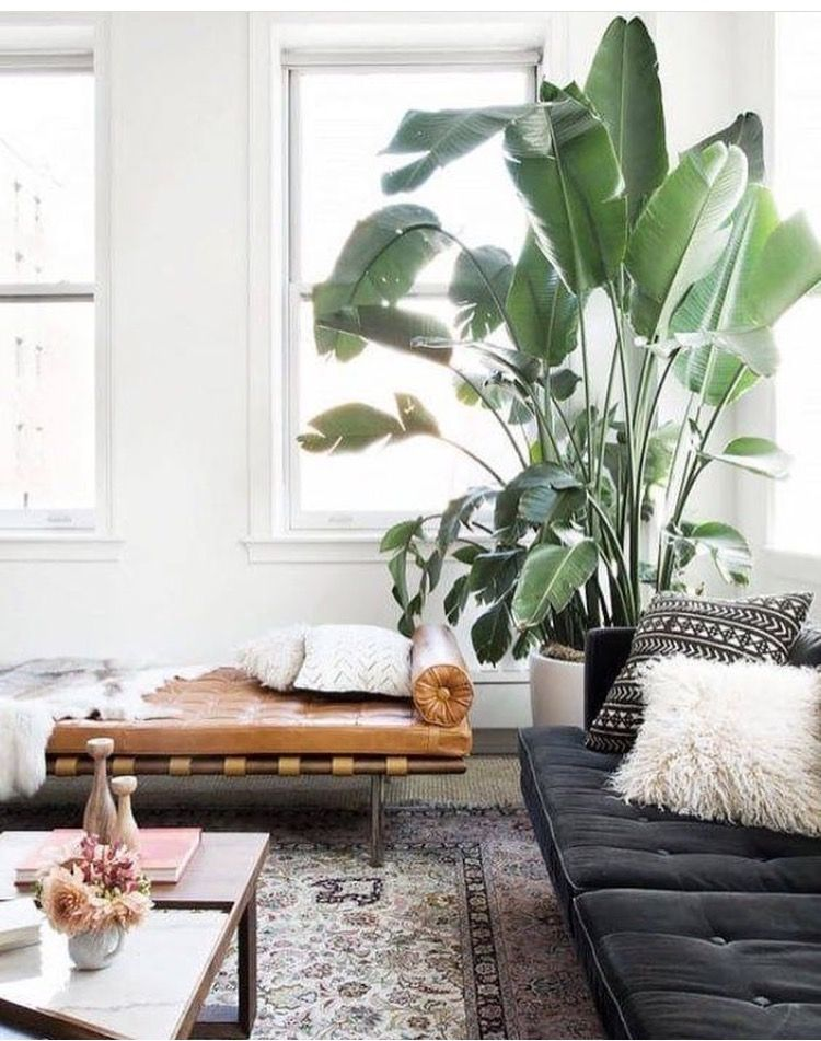 bird of paradise in living room decor