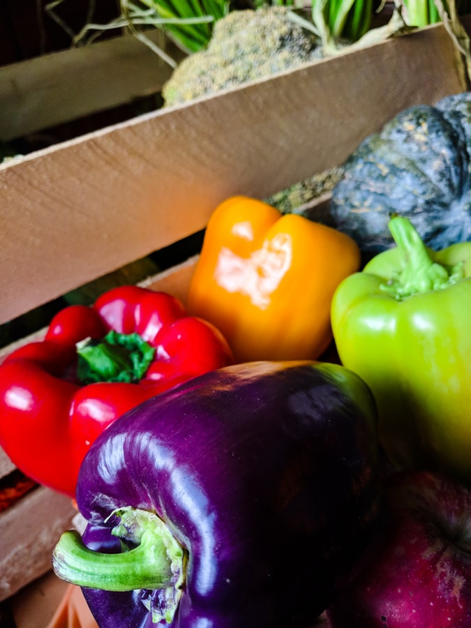 multi-color bell peppers