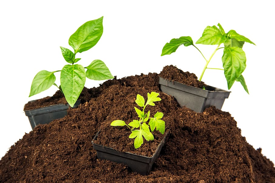 peat moss with plants