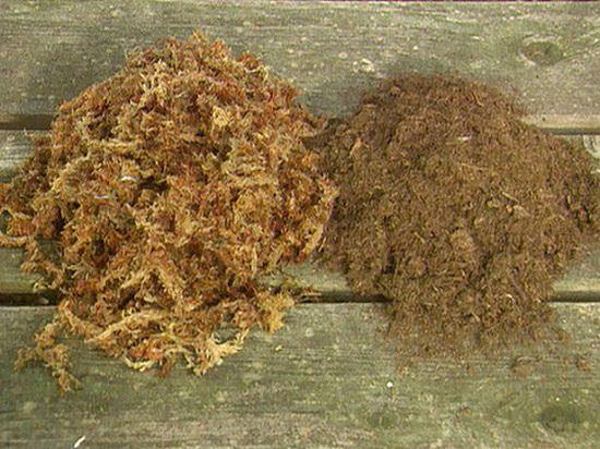 sphagnum moss vs peat moss